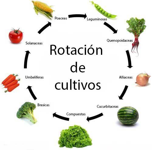 Image result for rotacion cultivo