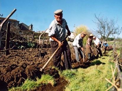 Agricultores labrando