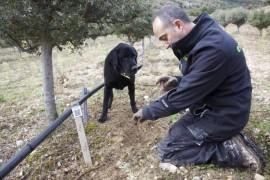 Truficultor y su perro buscando trufas