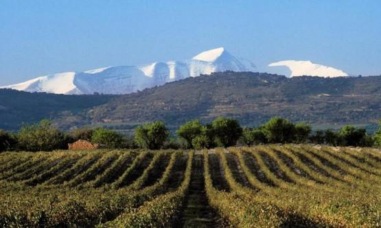 Viñedos de Viñas del Vero