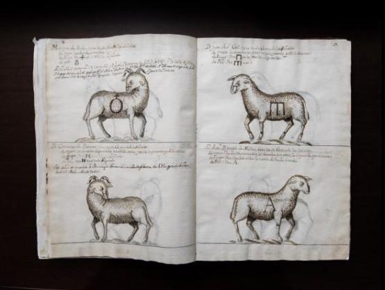 Archivo de Casa de Ganaderos, Libro de Marcas de 1722